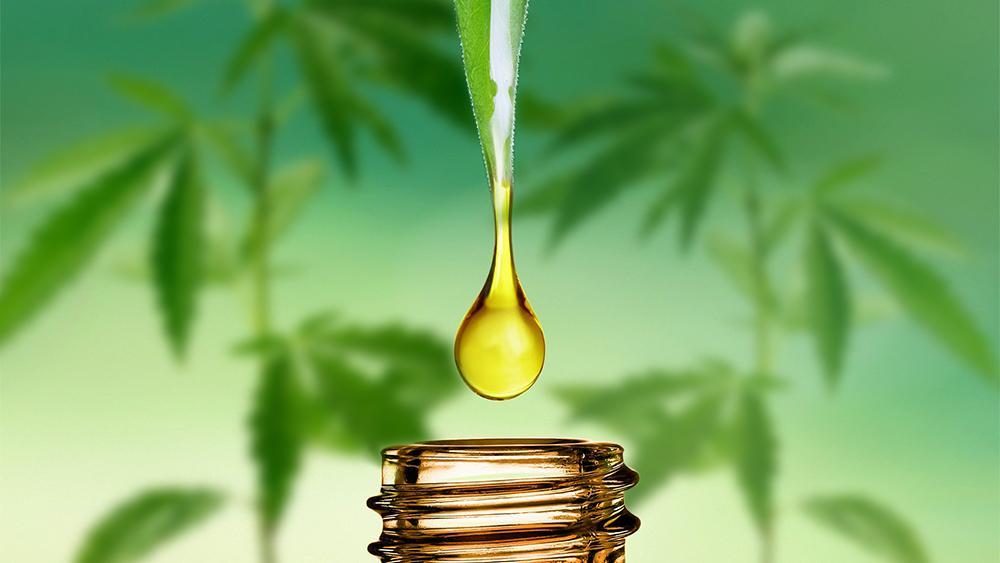 CBD Oil for Horses